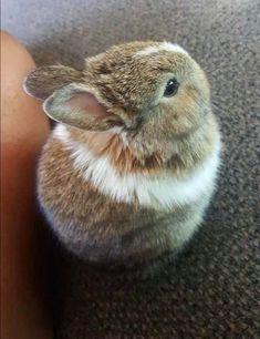 Cute bunny bun.