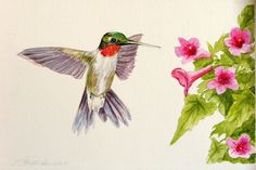Ruby Throated Hummingbird and Trumpet Vine by AbingdonArts on Etsy