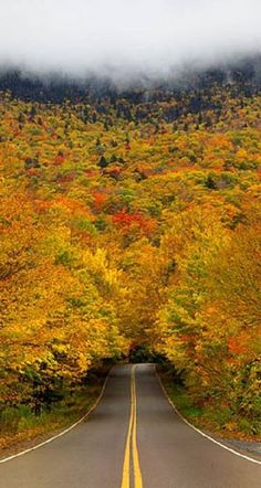 """""""Tree tunnel"""".. Smuggler's Notch State Park, Vermont"""