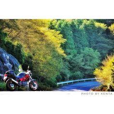 【kenta1250moto】さんのInstagramをピンしています。 《写真と関係ないけど、12月沖縄行きます!(初体験)  #バイク#ツーリング#バイクのある風景#朝#sunrise#秋#山#森#道#motorcycle#honda#VTR250#touring#autumn#forest#road#Japan#bj_mycar#本宮山#ファインダー越しの私の世界#写真好きな人と繋がりたい#ニコン#一眼レフ#カメラ#写真#Nikon#dslr#camera#D5300#ローアングル》
