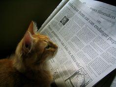 Reading.... #pet#cat