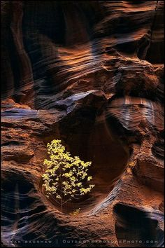 "our-amazing-world: "" Virgin River, Zion N Amazing World """
