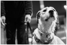 Never without him by lumiadino #ErnstStrasser #Belgien #Belgium Dogs, Animals, Belgium, Animales, Animaux, Doggies, Animal, Animais, Dieren