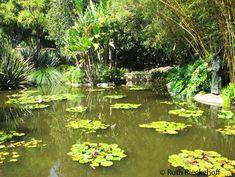 Pond, The Huntington, San Marino, California