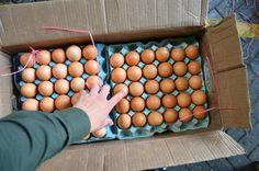 Noticias de Cúcuta: Incautadas cerca de 8.000 unidades de huevos y lic...