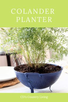 Colander Planter - Garden Terrarium, Garden Planters, Indoor Garden, Asparagus Fern, Landscape Fabric, Garden Signs, Cool Diy Projects, Petunias, Country Living