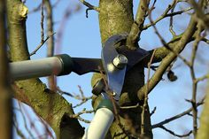 Плодовым деревьям требуется регулярная обрезка
