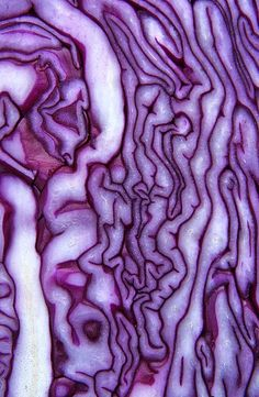 Red Cabbage    -  Durham, England UK   -     2011   -    Phil Gates photography   -  https://www.flickr.com/photos/64611767@N08/6273596648/