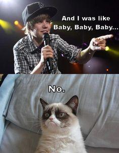 grumpy cat >
