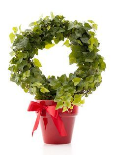 Use ivy and train around a wire frame or wire coat hange in a circle,