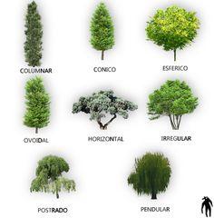 Rboles con fondo transparente png arq recursos for Tipos de arbustos ornamentales