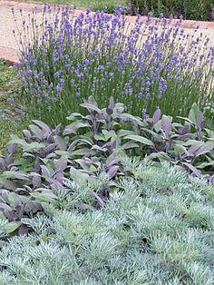 Artemisia, Salvia, Lavendula, Wormwood, Purple Sage And Lavender Sensory Garden Herbs Modern Landscaping, Front Yard Landscaping, Landscaping Ideas, Sensory Garden, Dry Garden, Garden Path, Xeriscaping, Garden Pictures, Garden Cottage