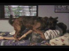 Cute Funny Dog Humping Little Boy