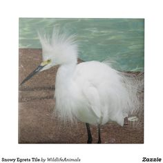 Snowy Egrets Tile