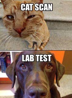 Cat Scan Joke Meme