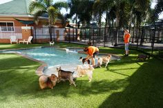 Muddy paws and dead grass are a thing of the past with EasyTurf artificial grass! www.easyturf.com l dog grass l pet friendly l outdoor living l fake grass l backyard l puppy l dog play area