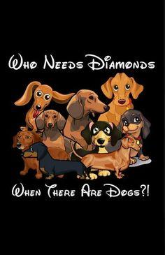 Dachshund #dogs #dachshund