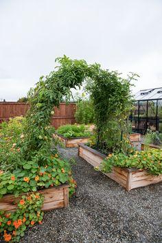Backyard Vegetable Gardens, Backyard Garden Design, Vegetable Garden Design, Backyard Landscaping, Outdoor Gardens, Farm Gardens, Garden Arch Trellis, Garden Arches, Raised Bed Garden Layout