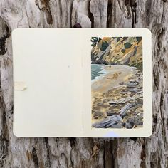 DuttonArt | Driftwood collection at Greenwood State Beach. Had...