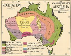 Vegetation of Australia map - ABC News (Australian Broadcasting Corporation) Gorgeous old map, but not too kind to Tassie if you take a closer look. Map Of Continents, New Oxford, Pictorial Maps, Cities, By Any Means Necessary, Australia Map, Wall Maps, Vintage Maps, Digital Storytelling