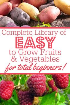 Wondering how to grow yor first veggie garden? Growing your own vegetables can be a daunting task for new beginners. Even if you're a total newbie to gardening, plant these 13 simple, easiest to grow Raised Vegetable Gardens, Vegetable Garden For Beginners, Home Vegetable Garden, Fruit Garden, Gardening For Beginners, Gardening Tips, Gardening Supplies, Small Garden Vegetable Growing, Small Raised Garden Ideas