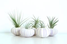 Purple Urchin Air Plant Planter by @thriftedandmade with Air... #gift #giftguide