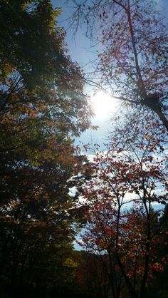 가을의 율동공원