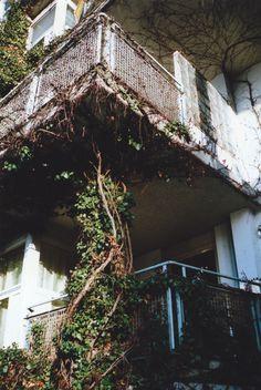 vines on the balcony