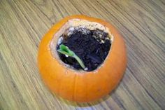 Such a cool project to do with the children!!! Place composting soil in the pumpkin with a couple of the seeds from inside the pumpkin and talk about reducing the carbon footprint by recycling. How much fun to grow new pumpkins from your Halloween pumpkin.