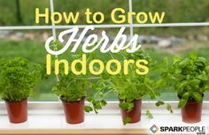How to Start an Indoor Herb Garden: It's not too late in the season to start these tasty seasonings. Indoor herb gardens can thrive year-round. Here is a guide for which herbs to try, what you need, and how to grow them. | via @SparkPeople #garden #gardening #kitchen #cook Herb Gardening, Indoor Gardening, Herbs Garden, Garden Tips, Garden Ideas, Container Gardening, Planting, Organic Gardening, Kitchen Gardening