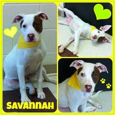 #adoptable at #Joliet township animal control on Facebook