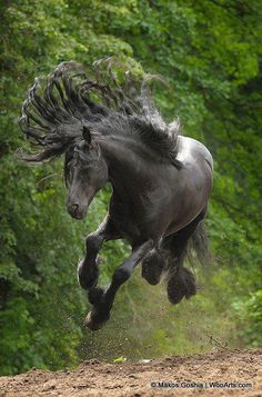 Horse jumping up on all fours. This pic is just too cool not to pin.