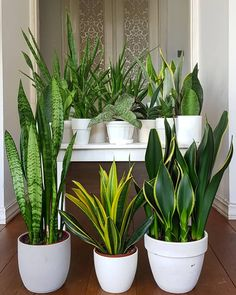 This simple herb hanging idea uses a steel pipe, rope, and glazed planters to make a stunning indoor garden display. Best Indoor Plants, Outdoor Plants, Indoor Garden, Potted Plants, Succulents Garden, Garden Plants, Planting Flowers, Gardening Vegetables, Sansevieria Plant