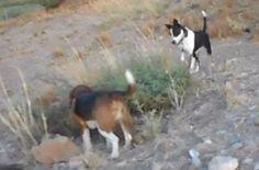 Dog high predatory drive