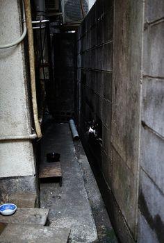 宮崎繁華街の猫