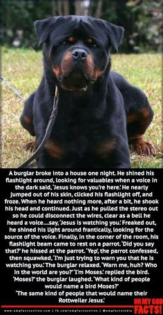 Jesus the Rottweiler :D Heard this joke years ago when I got my first Rottie - Glad to see it being spread around! Animals And Pets, Funny Animals, Cute Animals, Funny Dogs, Cute Dogs, Funny Cute, Hilarious, Haha, Men In Black