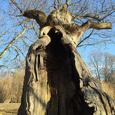 Door to a fairy tale #artipic #photoediting #nature #simple #artipicstudio