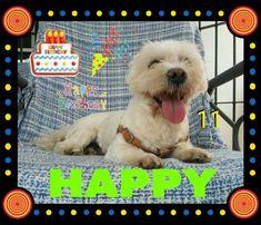Hoy cumpleaños el pequeño Happy le deseamos muchos mimos y chuches 🎉🎂🎈🍗🥓💞🐕😘😘