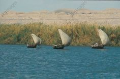 Nile Sprit-Rigged Faluka. The 'Faluka' Sailing Boats Used on The Nile for Many Generations as General Transport Vessels