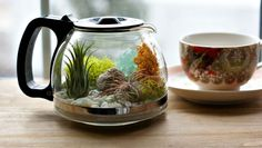 """Would You Like To Have A Cup Of Terrarium? Would You Like To Have A Cup Of Terrarium? A Cup Of Coffee? If you like coffee and planting, why not make this cute cup of terrarium? Terrariums Diy, Air Plant Terrarium, Garden Terrarium, Succulents Garden, Planting Flowers, Terrarium Ideas, Succulent Ideas, Planter Ideas, Glass Terrarium"