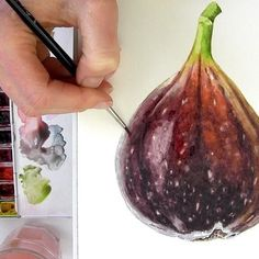 Learn how to paint a colourful, velvety fig in watercolour in this tip video…