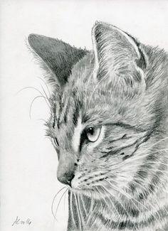 drawing Tabby Kitten #animalart #cat #catart