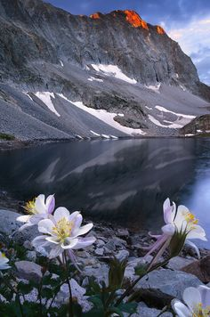 ~~Capitol Bouquet ~ reflections and columbines at Capitol Lake, near Aspen, Colorado at sunrise by Wayne Boland~~