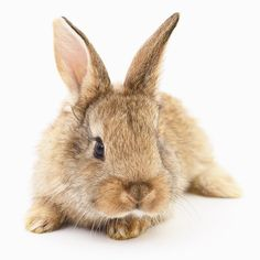 We only test our products on human beings Instagram Accounts, Bunny, Photo And Video, Videos, Animals, Products, Cute Bunny, Animales, Animaux