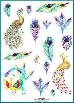 Peacocks Illustration