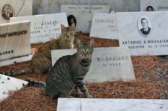 "15"" x 10"" Photography Print by Stephanie Sadler  - Cemetery Cats of Athens, Greece - Travel"