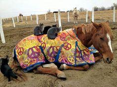 """un cavallo """"pacifico"""""""