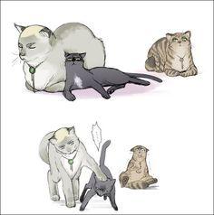 Shingeki no Kyojin - Erwin, Levi and Eren - Cat's Attack On Titan Funny, Attack On Titan Ships, Attack On Titan Anime, Eren Y Levi, Levi And Erwin, Kuroko, Shonen Ai, Aot Memes, Cute Kawaii Animals