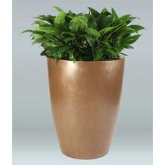 Allied Molded Products Raleigh Round Pot Planter Color: Plum