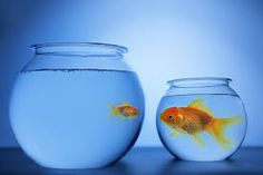 Image result for fish bowl